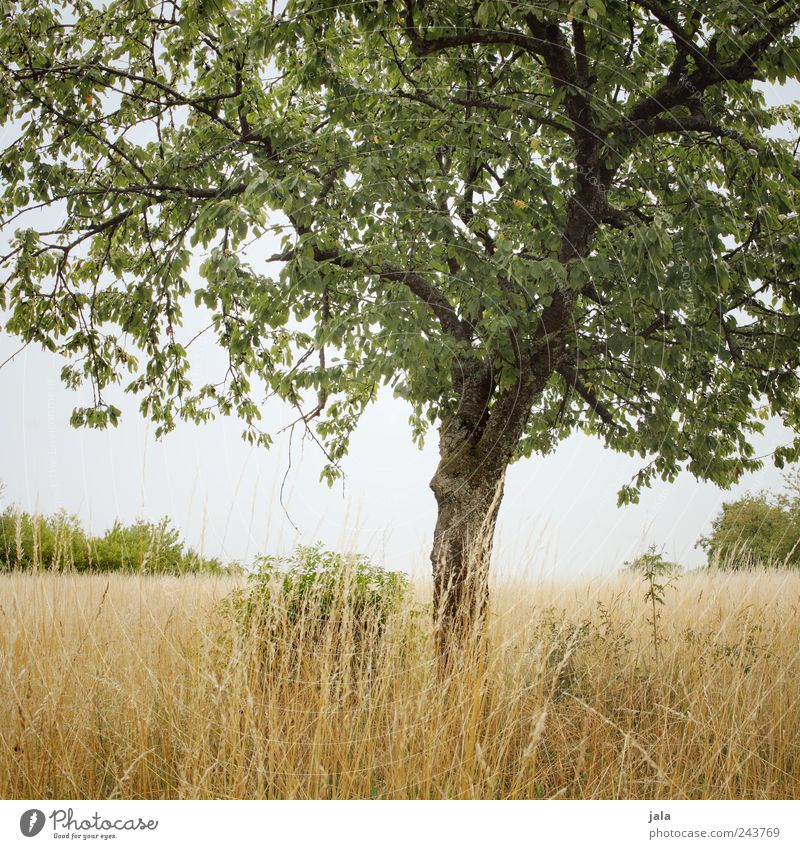 Nature Sky Tree Green Plant Grass Landscape Brown Field Environment Gold Bushes Natural Foliage plant Agricultural crop