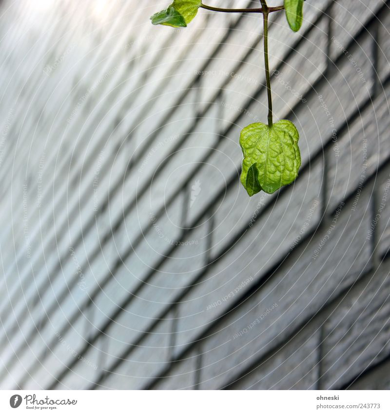 Nature Plant Leaf House (Residential Structure) Wall (building) Happy Wall (barrier) Facade Hope Joie de vivre (Vitality) Belief Optimism Foliage plant