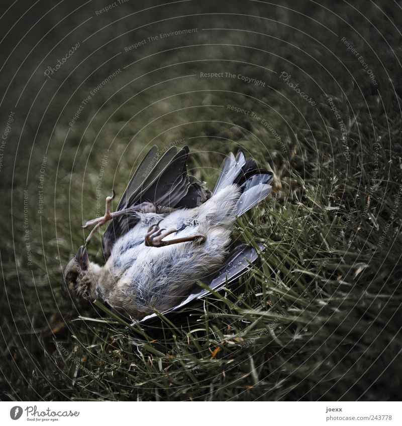 Old Green Calm Animal Death Grass Gray Brown Bird Creepy