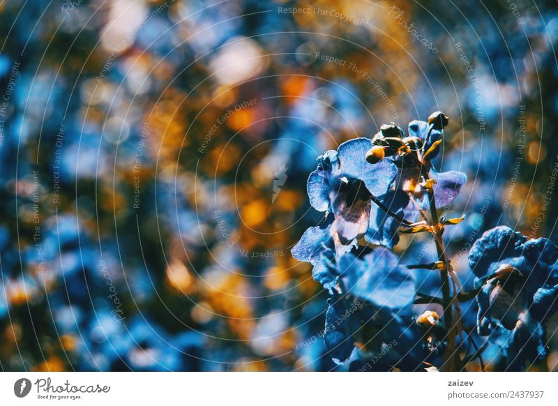 close up colorful small flower blue color background in garden Design Beautiful Summer Mountain Garden Environment Nature Plant Flower Leaf Blossom
