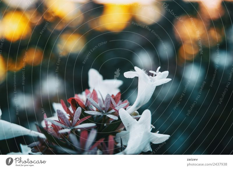 close up colorful small flower white color background in garden Design Beautiful Summer Mountain Garden Environment Nature Plant Flower Leaf Blossom