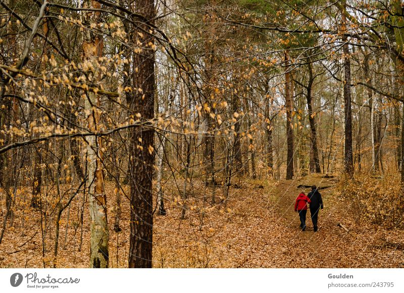 Human being Nature Tree Plant Relaxation Forest Love To talk Autumn Movement Happy Think Couple Friendship Brown Together