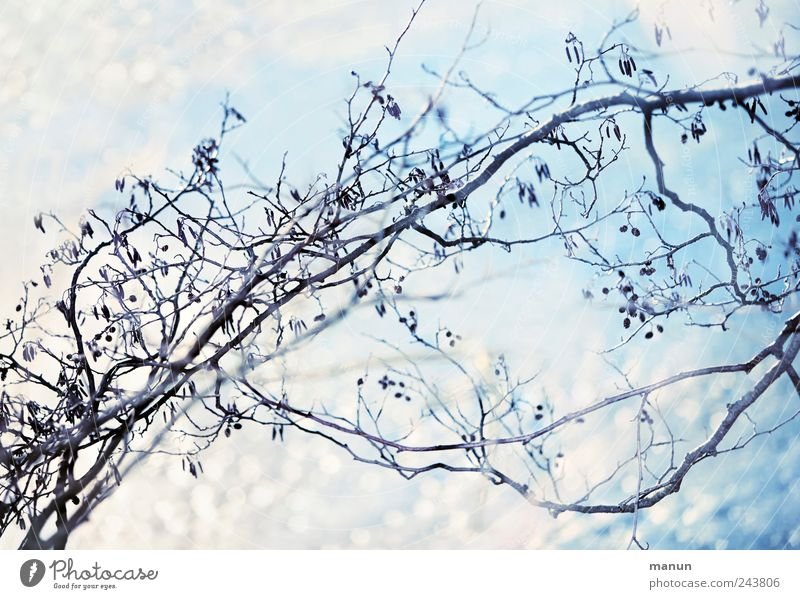 ice blue Nature Ice Frost Snow Tree Twigs and branches Glittering Bright Cold Blue White Colour photo Exterior shot Deserted Copy Space top Copy Space bottom