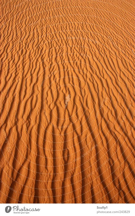 Desert in Saudi Arabia Nature Landscape Elements Sand Earth Summer Climate Climate change Beautiful weather Wind Drought Coast Beach Observe Touch Relaxation