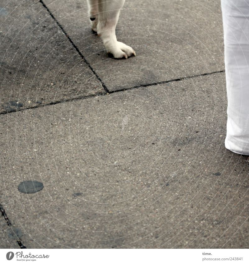 Stand by me Legs Dog Human being Pants Sidewalk Paw White Side by side Friendship Paving tiles