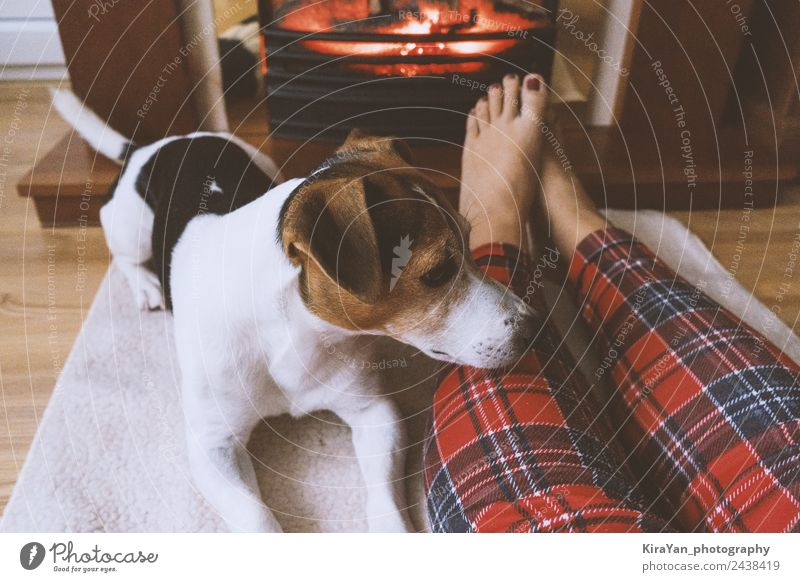Female feet ang cute dog in front fireplace Woman Dog Red Relaxation Winter Adults Warmth Funny Happy Small Feet Couple Friendship Sit Cute Pet