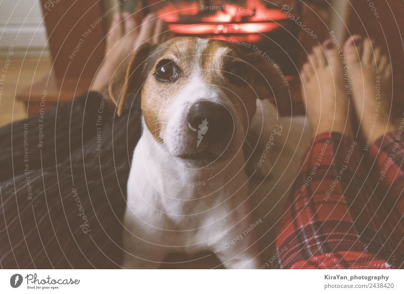Legs of Couple and jack russell dog are sitting by the fireplace Vacation & Travel Dog Christmas & Advent Red Relaxation Winter Warmth Lifestyle Funny