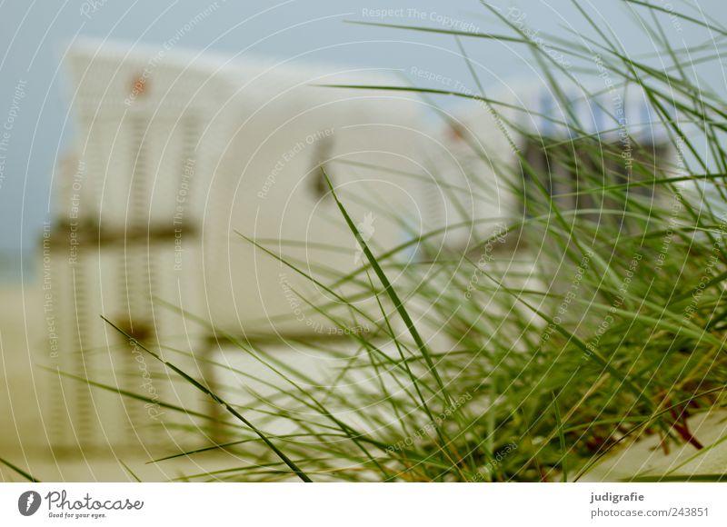 Nature Summer Beach Vacation & Travel Calm Relaxation Grass Landscape Moody Coast Environment Idyll Beach dune Baltic Sea Beach chair Darss