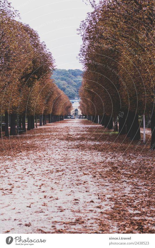 Schönbrunn Palace Park in autumn Vacation & Travel Tourism Trip Sightseeing City trip Museum Architecture Nature Landscape Garden Vienna Austria Europe Town