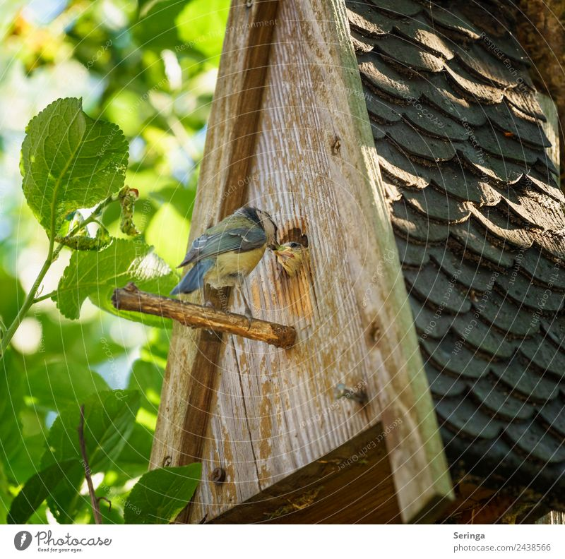 feeding Animal Wild animal Bird Animal face Wing Claw 2 Baby animal Animal family Feeding Tit mouse Love of animals Feather Nesting box Colour photo