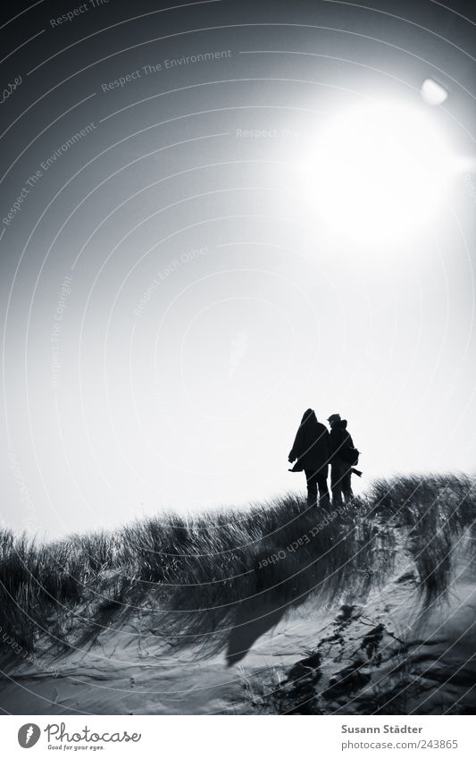 Human being Sun Grass Friendship Together Wind Dangerous Bushes Hill Dune North Sea Infatuation Loyalty Optimism Unwavering