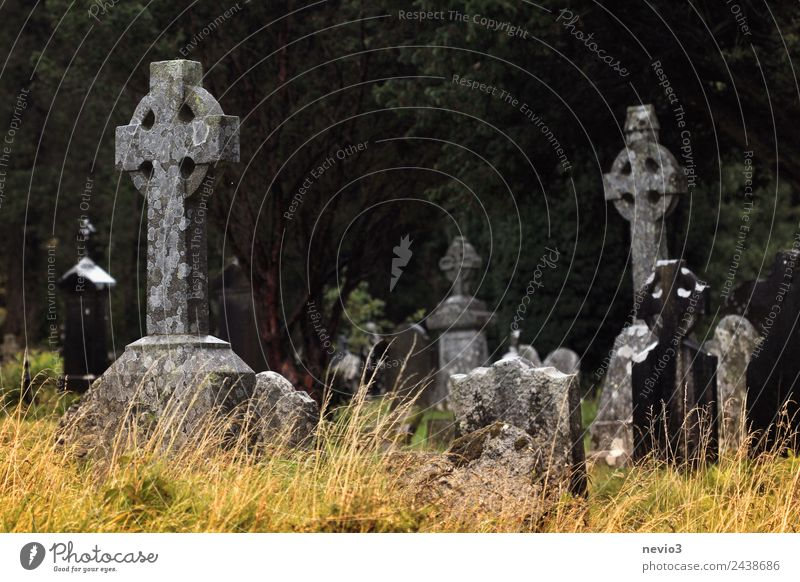 Old Celtic stone crosses near Glendalough in Ireland Environment Grass Park Belief Sadness Peace Religion and faith Calm Pain Death Transience Stone cross