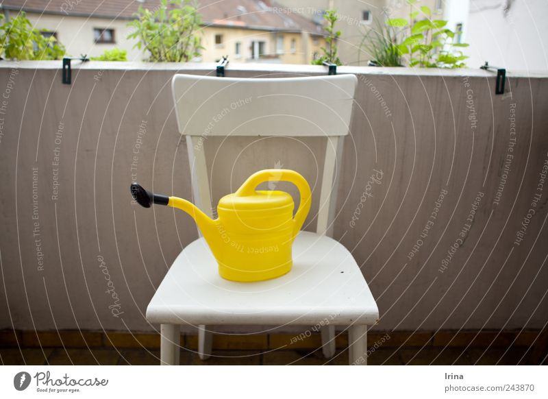 I'm on my summer break. Watering can Wall (barrier) Balcony Backyard Herbs and spices Plant Cast Yellow Exterior shot Central perspective