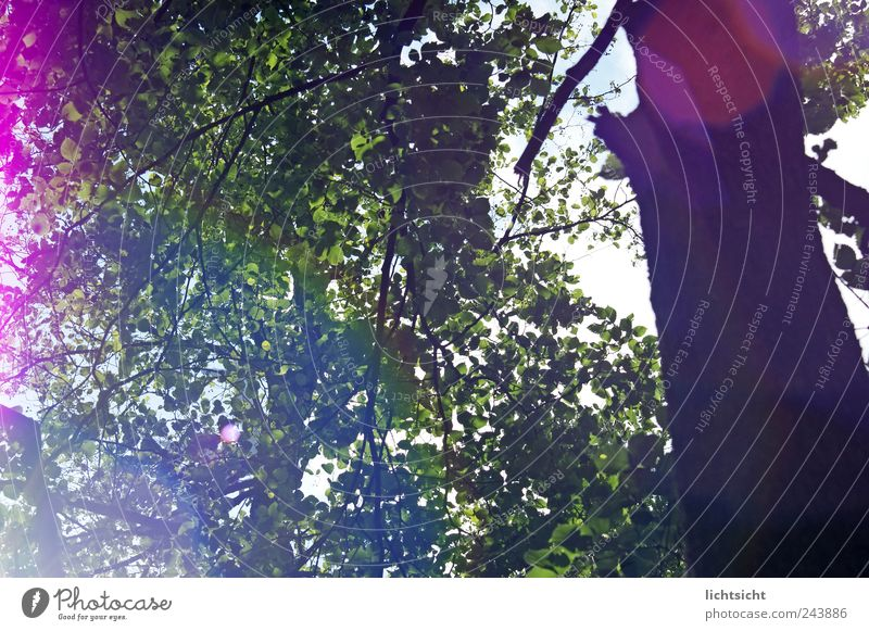 the glow in the forest Environment Nature Plant Summer Beautiful weather Tree Forest Multicoloured Green Pink Joie de vivre (Vitality) Freedom