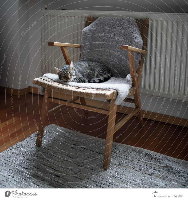 cat's life Living or residing Flat (apartment) Furniture Armchair Carpet Heating Parquet floor Animal Pet Cat 1 To enjoy Sleep Brown Gray White Trust