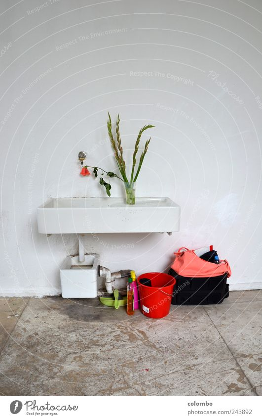 washbasin 2 Academic studies Workplace Art Artist Painter Exhibition Event Atelier Experimental Wall (barrier) Wall (building) Sink cleaning bucket Gladiola
