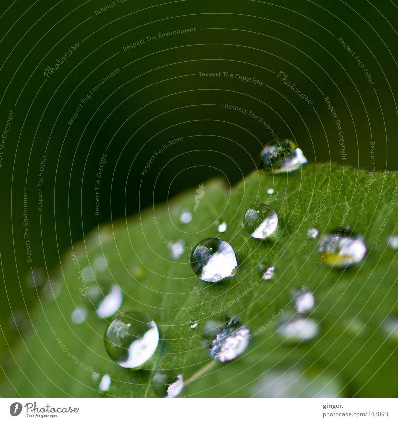 Nature Plant Beautiful Green Summer Water Leaf Environment Rain Glittering Drops of water Wet Round Damp Rachis Gap