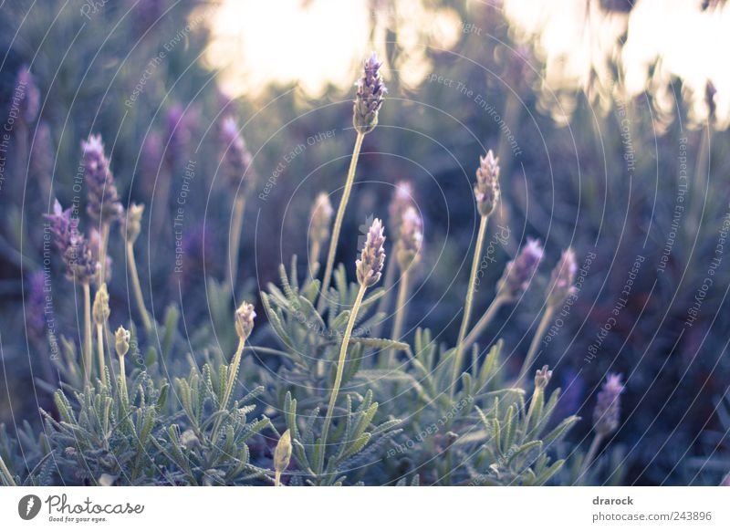 Beauties Nature Plant Flower Grass Leaf Blossom Wild plant Park Green Violet drarock Colour photo Exterior shot Morning Shallow depth of field