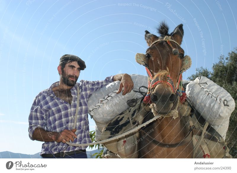 Andalusian Duo Spain Andalucia Society Rural Human being Donkey