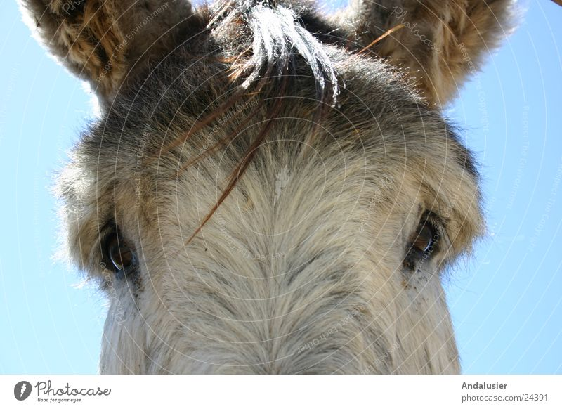 Look me in the eye Animal Nature Eyes Looking Near Donkey