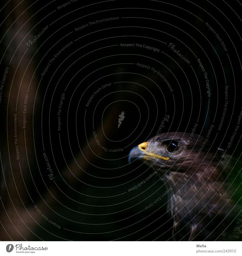 Nature Eyes Animal Dark Brown Bird Esthetic Animal face Natural Mysterious Wild animal Beak Hawk