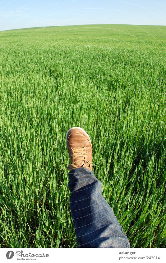 Nature Life Grass Feet Landscape Legs Field Wind Environment Perspective Energy industry Growth Future Change Climate Agriculture