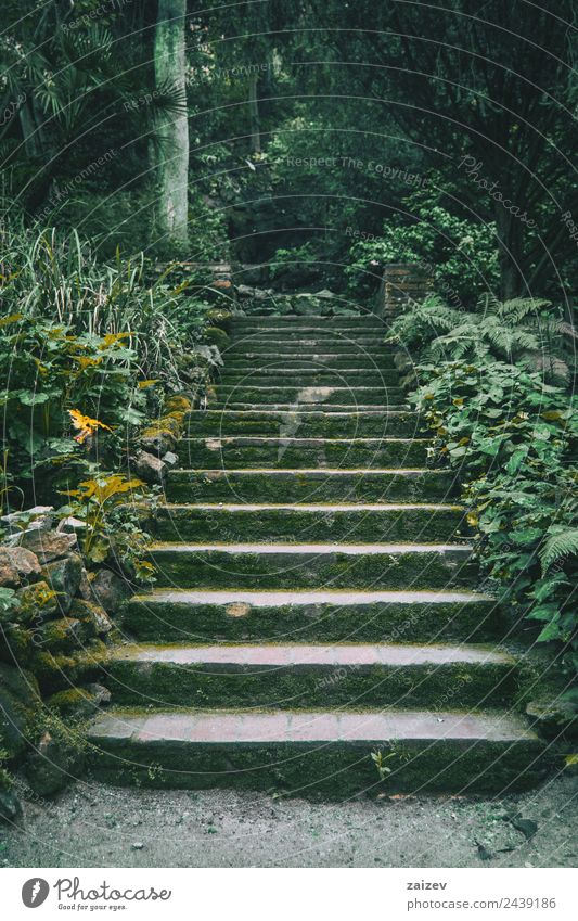 stairs with moss in the middle of a dark forest Vacation & Travel Tourism Winter Garden Environment Nature Landscape Plant Moss Park Forest Stone Old Dark Small
