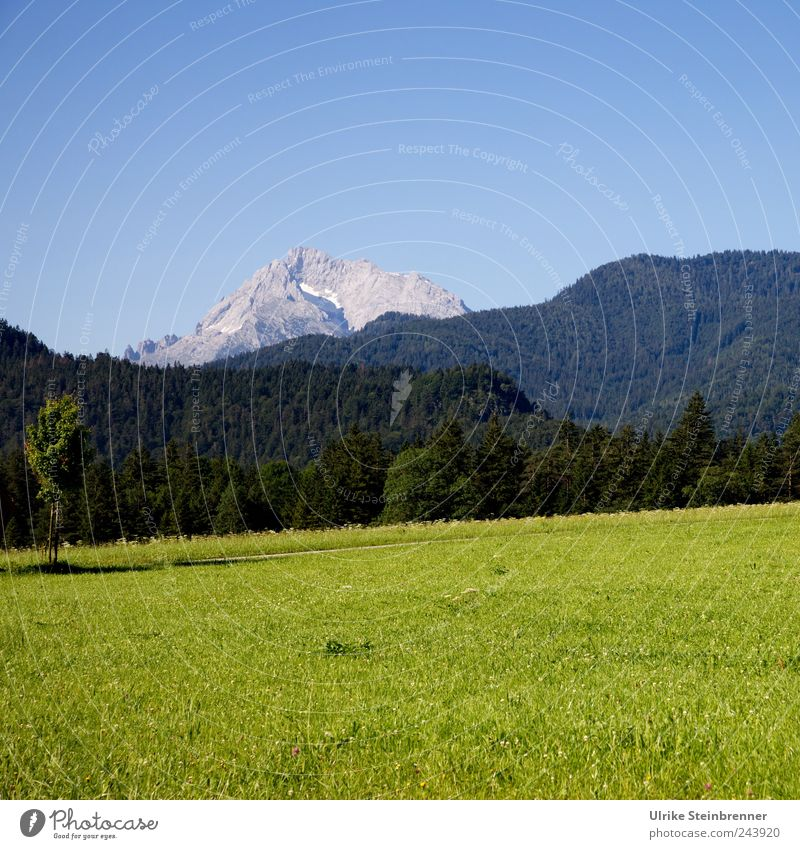 Nature Green Blue Beautiful Tree Plant Summer Calm Loneliness Relaxation Mountain Landscape Grass Field Tall Tourism