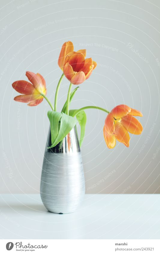 tulip splendour Plant Flower Tulip Yellow Silver Limp Vase Decoration Bright Blossoming Colour photo Interior shot