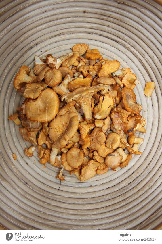forest friends Food Vegetable Chanterelle Nutrition Buffet Brunch Vegetarian diet Bowl Wood Circle Authentic Delicious Original Round Yellow Gold Fragrance