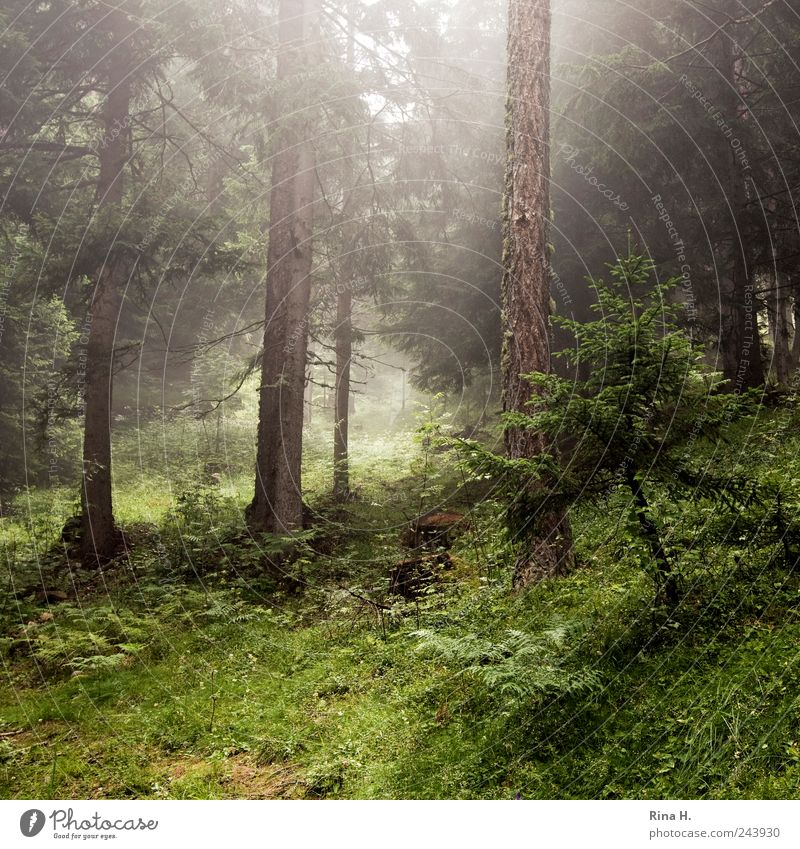 Nature Tree Plant Summer Forest Grass Mountain Landscape Moody Fog Weather Environment Bushes Climate Hill Fir tree