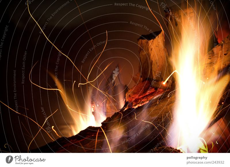 flame tongue Vacation & Travel Expedition Camping Summer vacation Feasts & Celebrations Hallowe'en Nature Fire Meadow Wood Esthetic Threat Hot Brown Yellow