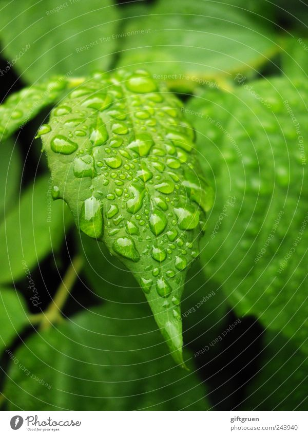 Another Rainy Day Environment Nature Plant Water Drops of water Bad weather Tree Foliage plant Garden Wet Precipitation Weather Rainwater Bushes Damp Rachis