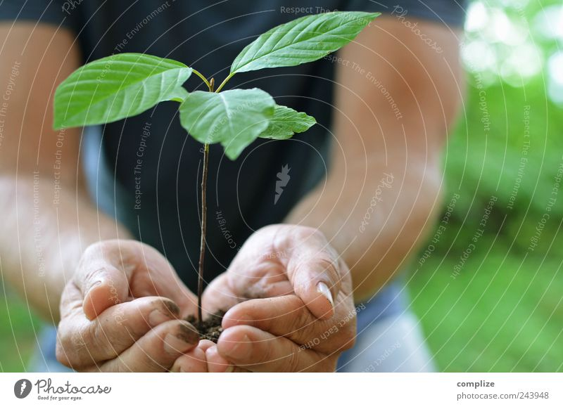 Human being Man Plant Green Summer Tree Hand Adults Environment Garden Masculine Growth Earth Arm Agriculture To hold on