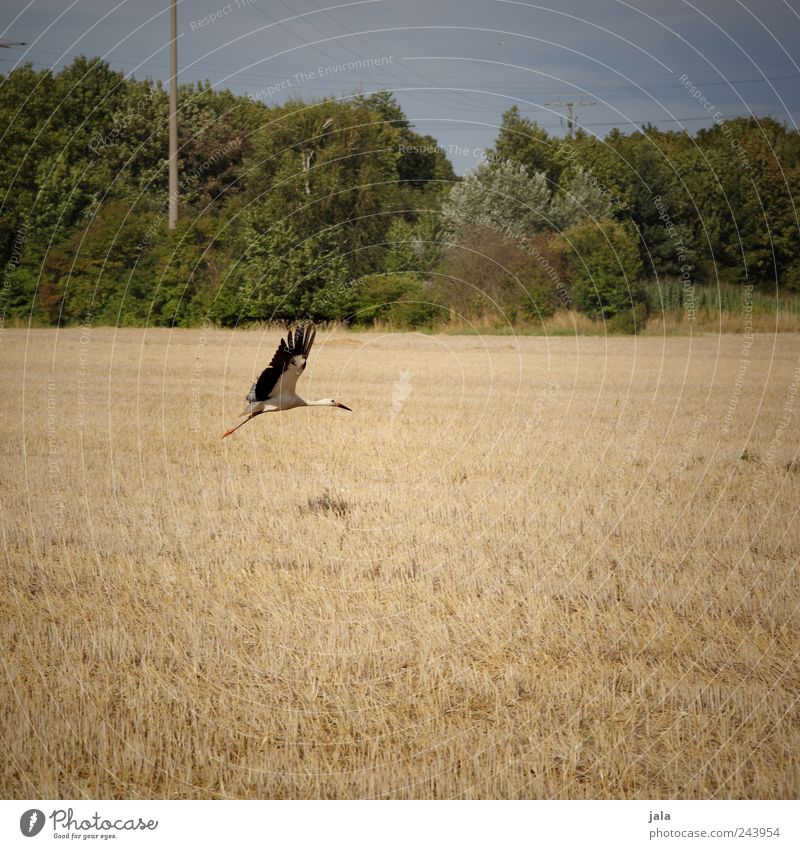 departure Environment Nature Landscape Plant Animal Sky Tree Grass Bushes Field Wild animal Bird Stork 1 Flying Colour photo Exterior shot Deserted