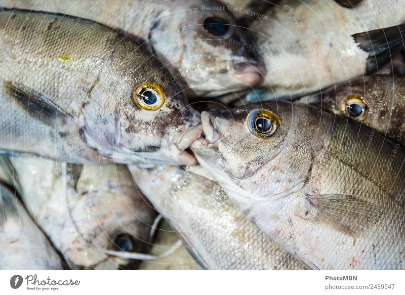 The kiss Food Fish Fishing village Animal Dead animal 2 Group of animals Kissing Natural Blue Gold Gray Silver Emotions Agreed Love of animals Death Infinity