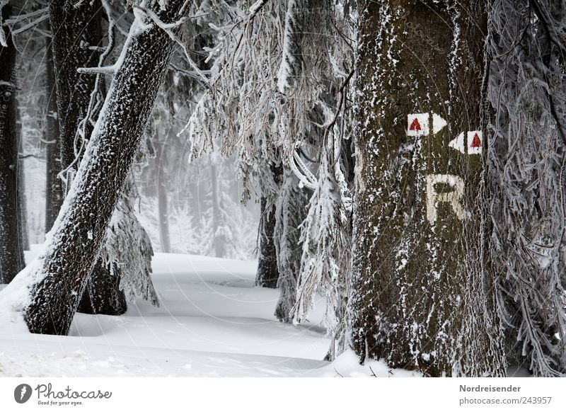 Frosty characters Tourism Winter Snow Winter vacation Nature Landscape Plant Climate Ice Tree Forest Lanes & trails Sign Characters Signs and labeling Arrow