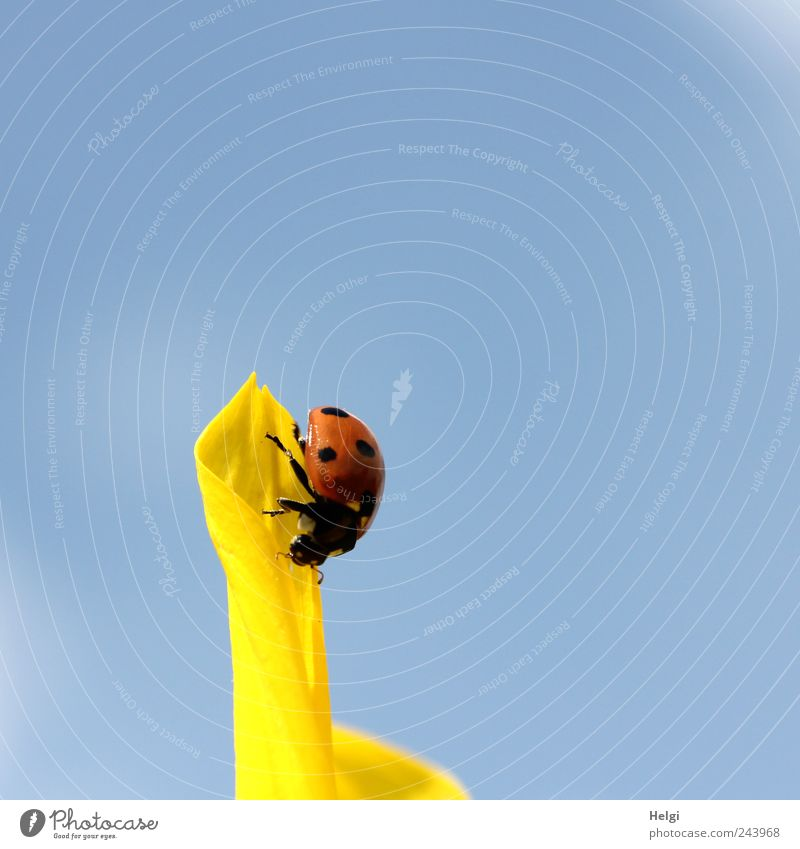 frontrunners Nature Plant Sky Cloudless sky Summer Beautiful weather Flower Blossom Sunflower Blossom leave Animal Wild animal Beetle Ladybird 1 Blossoming