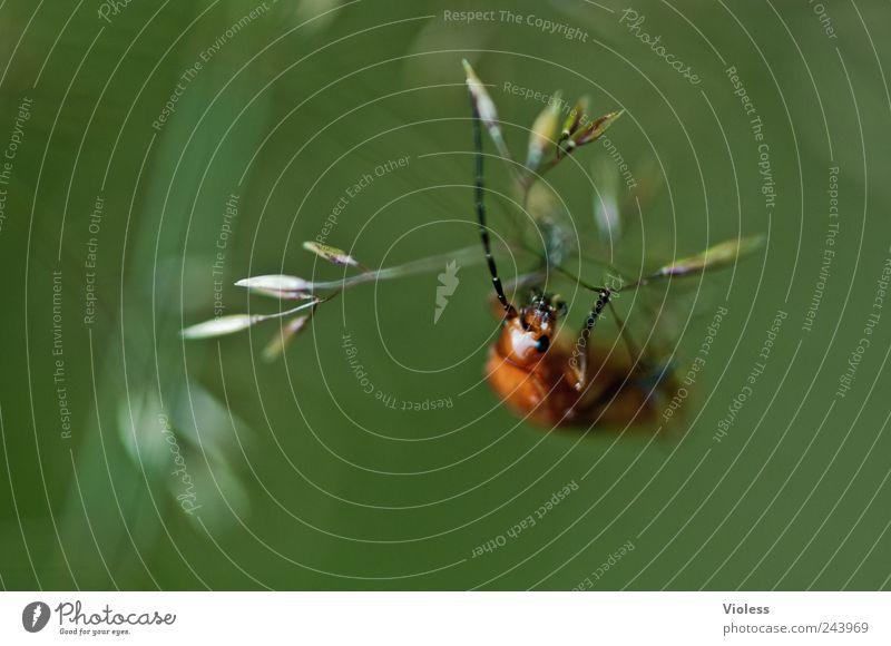 Animal Natural Beetle