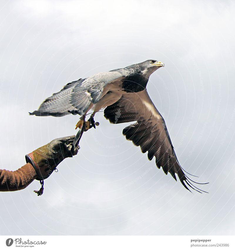 Human being Sky Man Nature Hand Summer Clouds Animal Adults Freedom Bird Elegant Flying Wild animal Esthetic Aviation