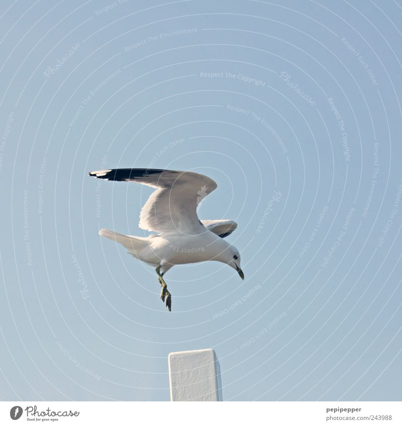 spot landing Far-off places Freedom Summer Air Sky Cloudless sky Beautiful weather Coast Port City Animal Wild animal Bird Wing Claw 1 Flying Blue White Seagull