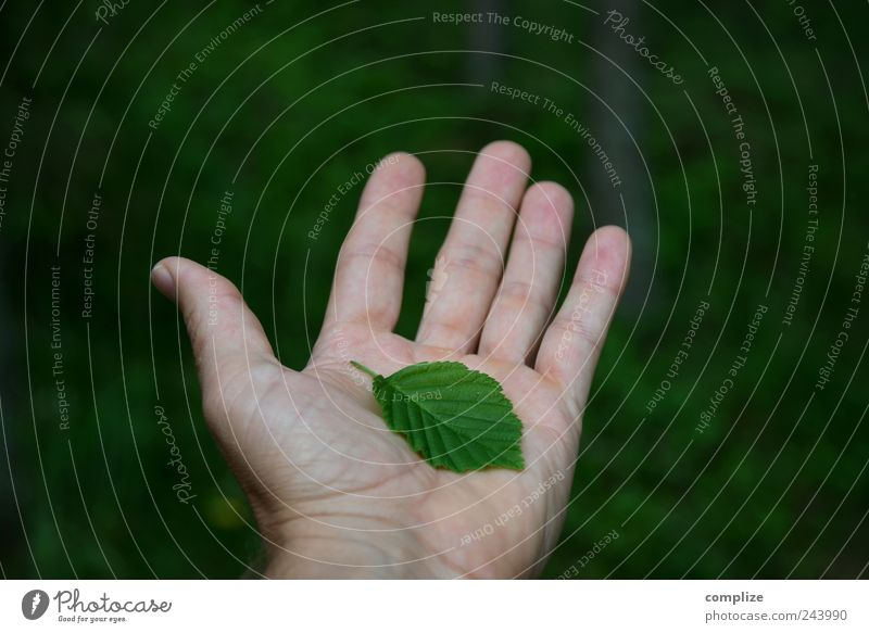 Human being Nature Hand Green Tree Plant Summer Leaf Calm Forest Environment Fingers Future Safety Protection To hold on