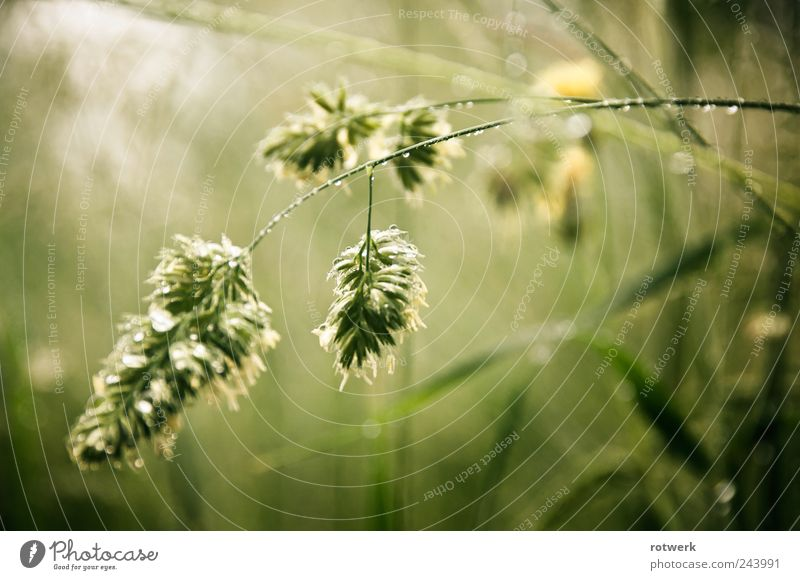 Nature Green Plant Summer Meadow Grass Sadness Field Dew Effort Flexible Honest Bravery Wild plant