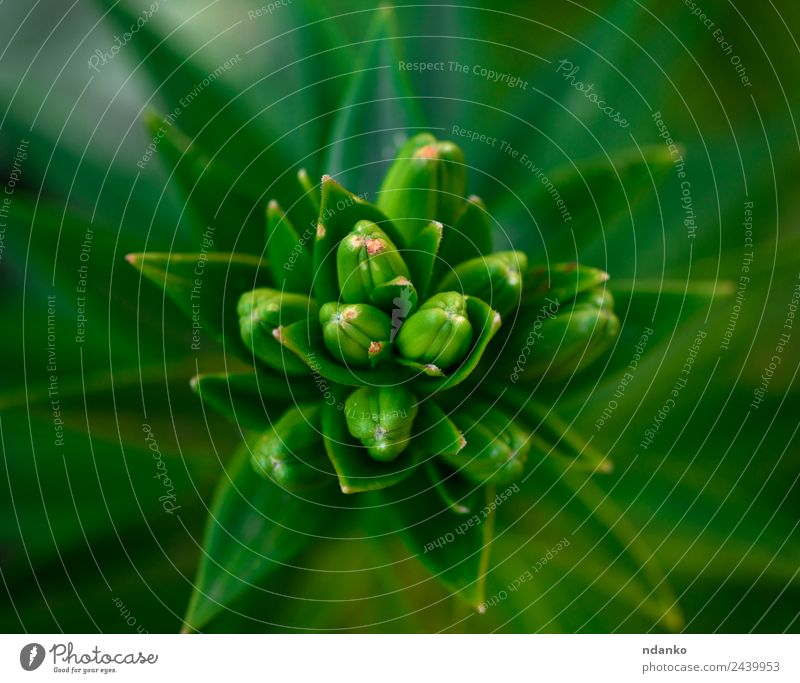 green leaves Nature Plant Flower Leaf Fresh Above Green Colour Lily background spring Botany stem lilly Floral Colour photo Close-up Deserted Bird's-eye view