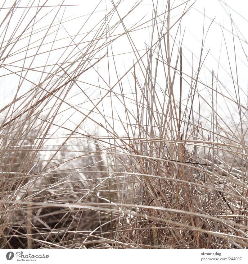 Nature Plant Summer Beach Emotions Grass Coast Dream Elegant Energy Natural Gloomy Bushes Dry Idyll Thin