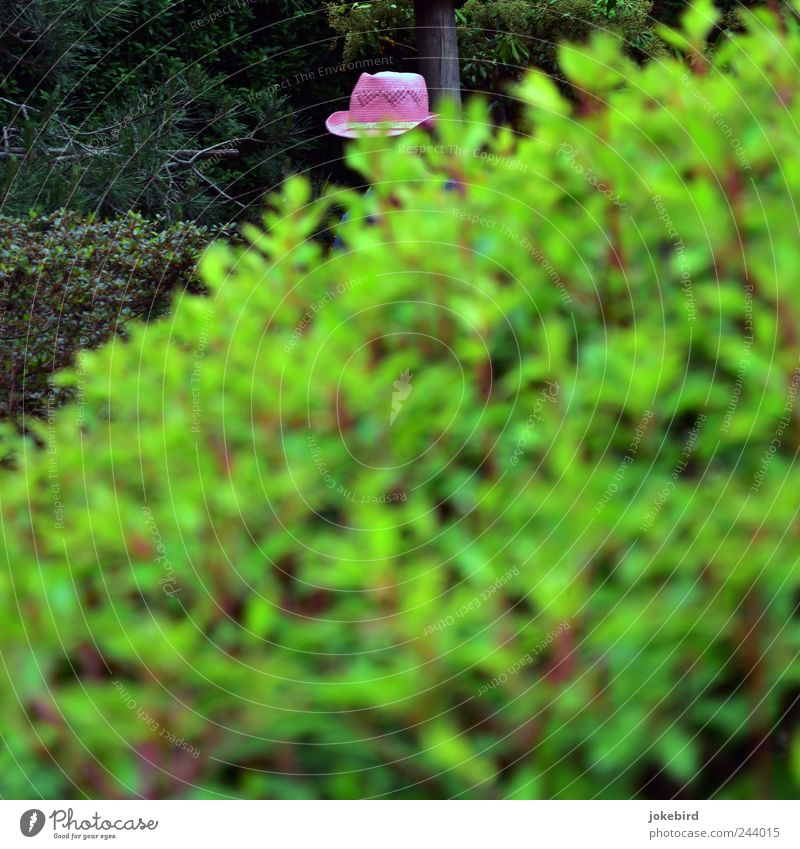 The beautiful gardener Bushes Leaf Ornamental plant Hedge Hat Green Pink Modern Gardening Horticulture Hiding place Hide Straw hat Detail Distinctive Hidden