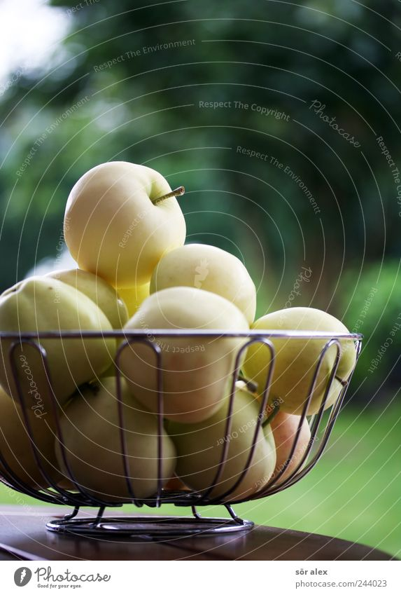 Green Healthy Eating Yellow Natural Garden Fruit Fresh Nutrition Sweet Round Many Delicious Organic produce Harvest Apple