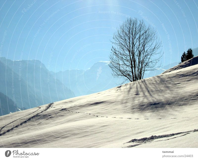 """Zigzag slit"" 2 Canton Glarus Hiking White Hill Tree Loneliness disappearances Snow Tracks Sun Blue Sky"