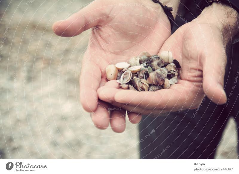 Man Hand Ocean Beach Vacation & Travel Black Sand Adults Masculine Collection Mussel Find Summer vacation