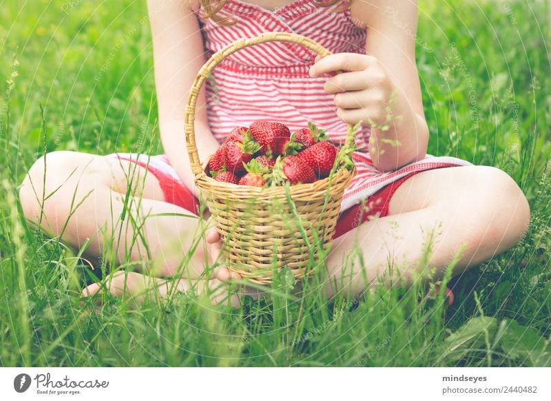 A basket full of strawberries in his lap Food Fruit Strawberry Vegetarian diet Basket Wellness Life Senses Summer Human being Feminine Girl Infancy Body 1